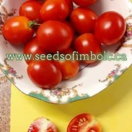 Yagodka Tomato – PLANT