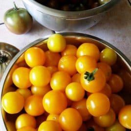 Hartmans Yellow Gooseberry Cherry tomato – seeds