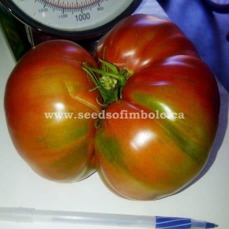 large Indian Stripe tomato
