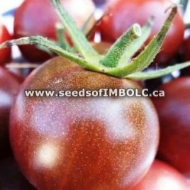 Brown Berry Cherry tomato – SEED