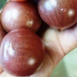 Black Cherry Tomato – SEED
